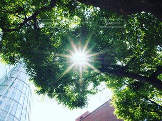 太陽光の写真・画像素材[2220089]