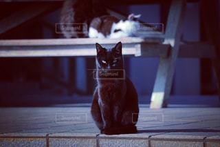 黒猫の写真・画像素材[2083733]