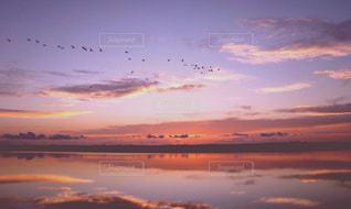 夜明けの鳥の写真・画像素材[2083870]
