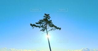 夜明けの一本松の写真・画像素材[2085386]