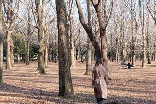 冬の公園の写真・画像素材[3383382]