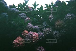 自然 - No.126235