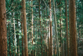 森の中 - No.936386