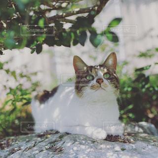木陰で一休みの写真・画像素材[2079256]