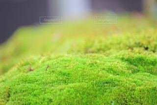 石に柔らかさをの写真・画像素材[2080252]