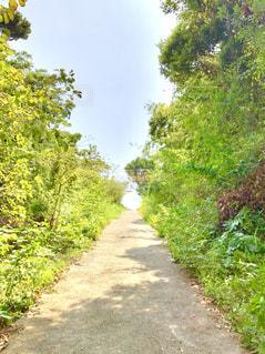 夏の上り坂の写真・画像素材[2084903]