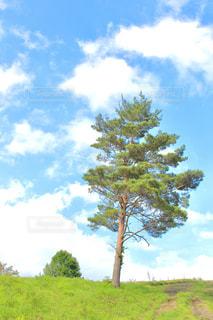 木の写真・画像素材[2097431]