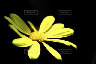 花のクローズアップの写真・画像素材[2100890]