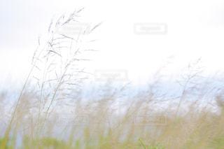風に煽られてもの写真・画像素材[2101728]