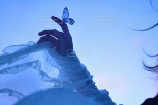 空を泳ぐの写真・画像素材[2259537]