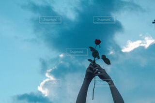 薔薇は刺があるの写真・画像素材[3109748]