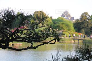 松と岡山城の写真・画像素材[2107587]