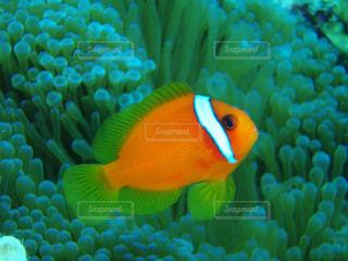 カラフルな魚の写真・画像素材[2080246]