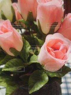 ピンクのバラの写真・画像素材[2088227]