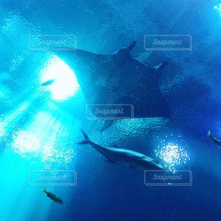 水面下を泳ぐ魚たちの写真・画像素材[2080813]