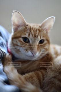 近くの猫のアップの写真・画像素材[2081366]