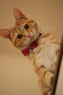 カメラを見ている猫の写真・画像素材[2081367]