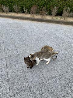 道路を歩いている猫の写真・画像素材[4245738]