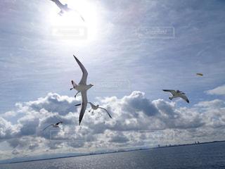 水域の上空を飛んでいるカモメの群れの写真・画像素材[2121492]