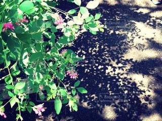 植物と陰の写真・画像素材[2082687]