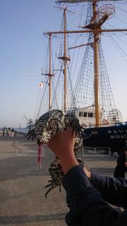 帆船とトカゲの写真・画像素材[2088128]