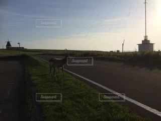 緑豊かな野原の上に立っている野生の鹿の写真・画像素材[2086933]