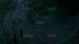 自然の写真・画像素材[599228]