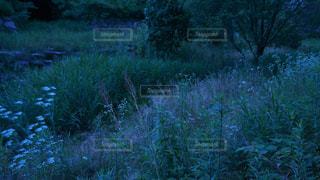 自然の写真・画像素材[599229]