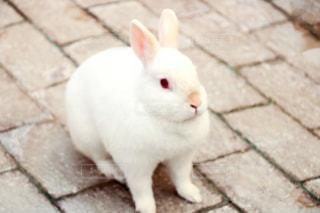 ウサギの写真・画像素材[2333256]