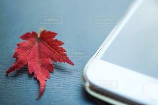 紅葉とアイフォンの写真・画像素材[2366899]