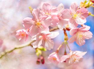 青空と桜の写真・画像素材[2928901]