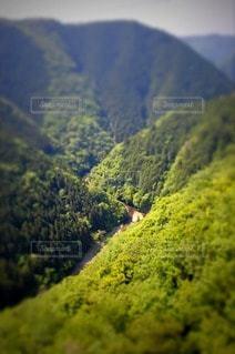 森林 - No.79110