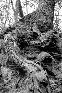 森林 - No.79114