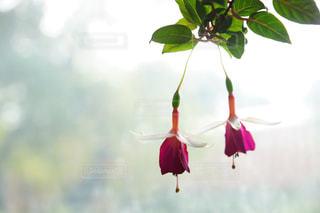 花のクローズアップの写真・画像素材[2090809]