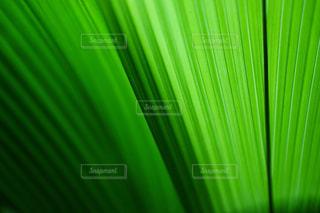 植物の接写の写真・画像素材[2093014]