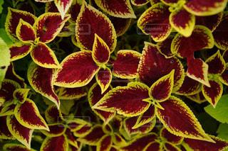 自然が生んだ美しい色の写真・画像素材[2093028]