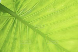緑と白の傘の写真・画像素材[2093036]