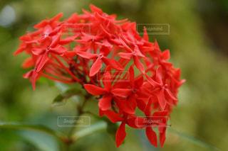 花のクローズアップの写真・画像素材[2093047]