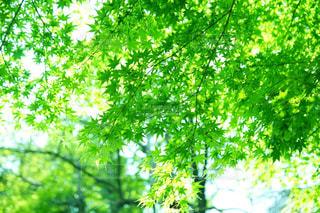 森の中の緑の植物の写真・画像素材[2110157]