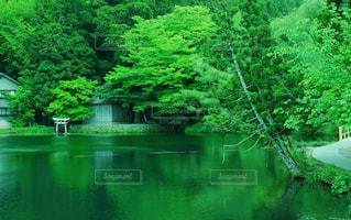 水域の緑のボートの写真・画像素材[2110279]