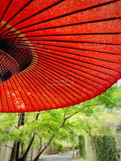 大きな赤い傘の写真・画像素材[2113516]
