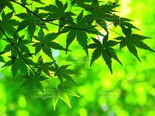 木のクローズアップの写真・画像素材[2122137]