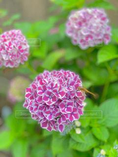 花のクローズアップの写真・画像素材[2186866]