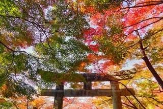 森の中の大きな木の写真・画像素材[2767590]