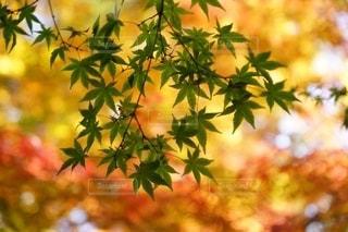 木の中で育つ植物の写真・画像素材[2767606]