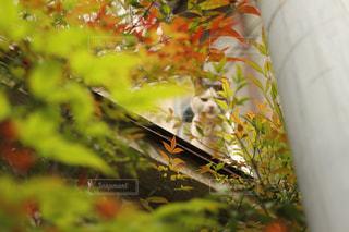 木の隙間から覗くネコの写真・画像素材[2102508]