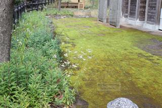 苔の絨毯の写真・画像素材[2110251]