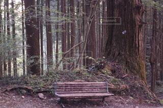 森の真ん中に座っている木製のベンチの写真・画像素材[2706614]
