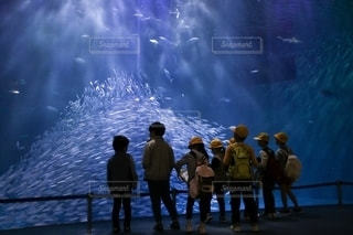 水槽を見上げる子供達の写真・画像素材[2725723]