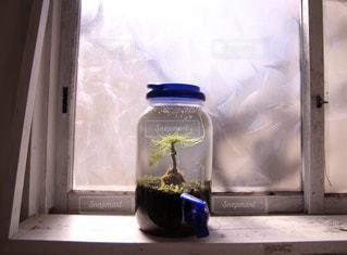 窓際のボトル水槽の写真・画像素材[2997198]